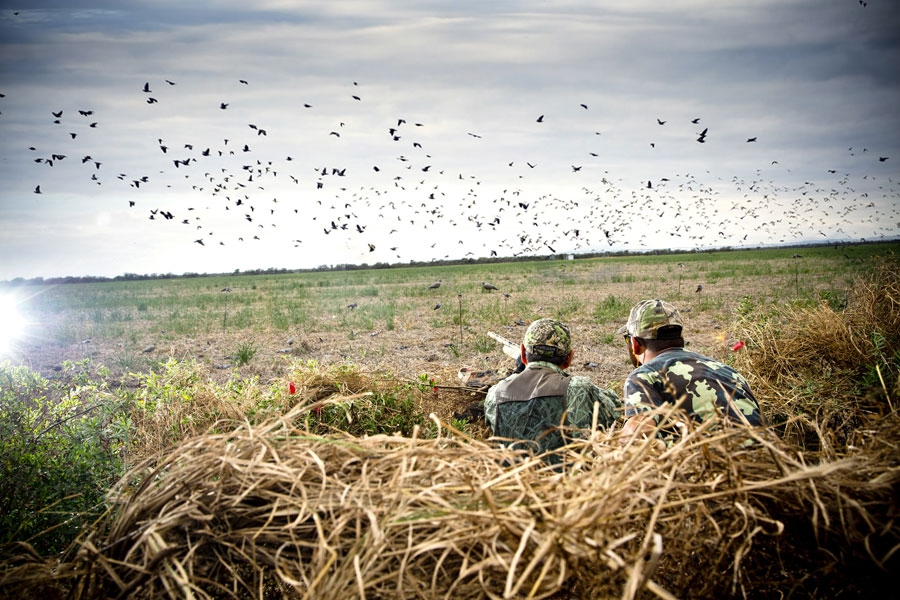 Guided Missouri Dove Hunting